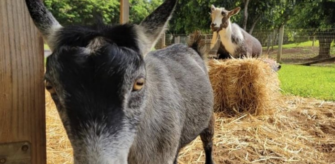 Mark Zuckerberg Alludes To Owning Bitcoin After He Shares Photo Of Pet Goat