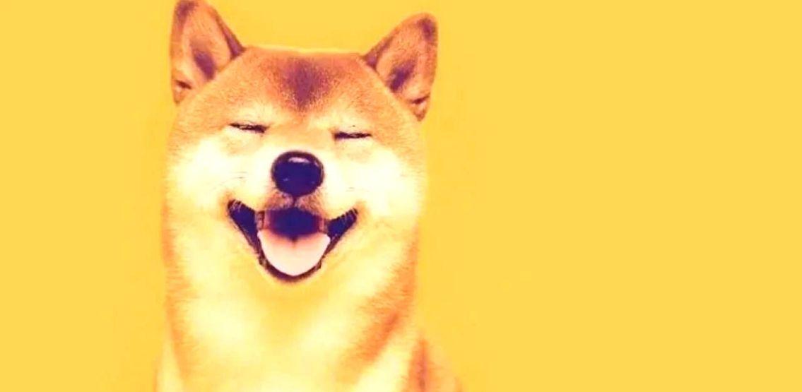 Shiba Inu Recap: From Strategic DeFi Partnerships To Fractionalization Of The Original Doge NFT