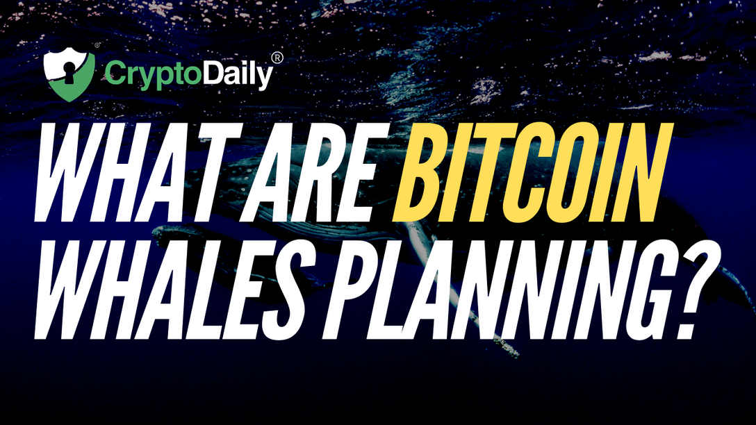 What Are Bitcoin (BTC) Whales Planning?