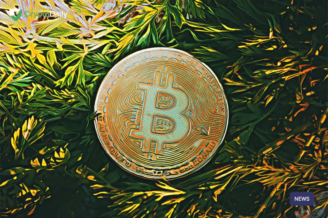 """Expert: """"Globalcoin's Effort Is The Most Bullish External Tailwinds For Bitcoin In 2019/2020"""""""