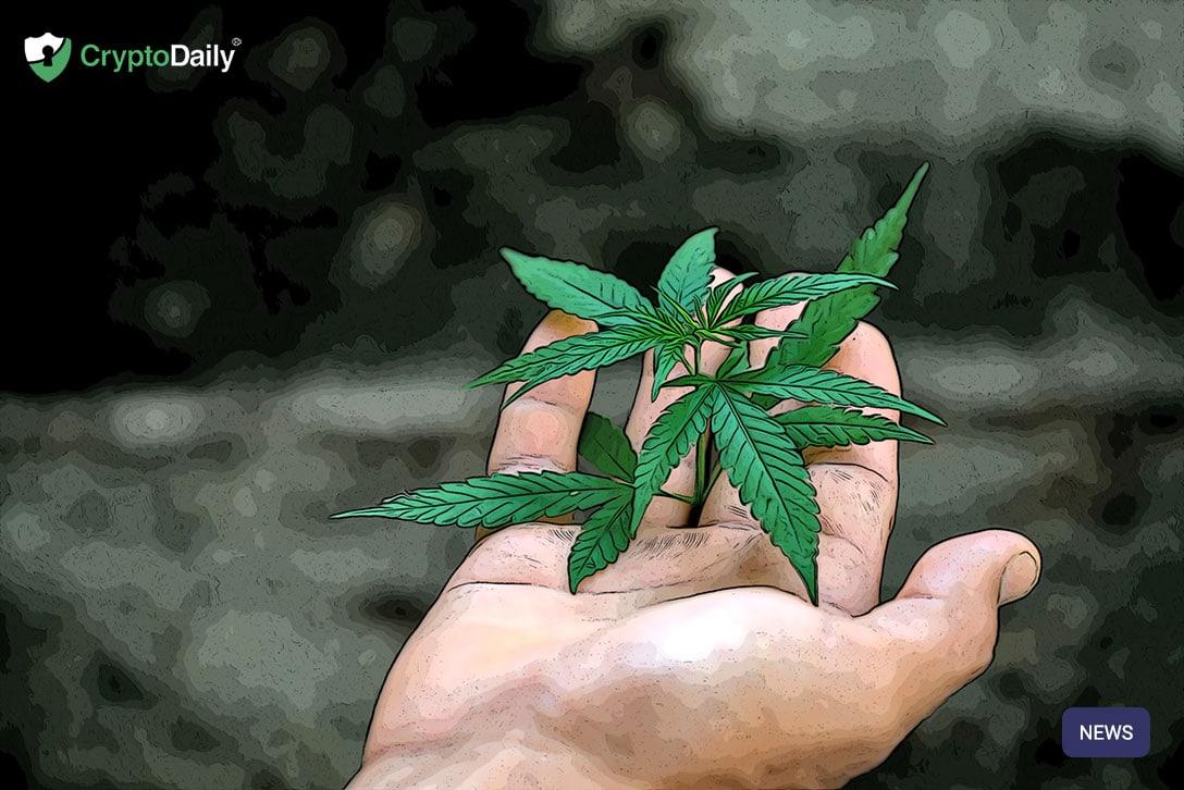 区块链如何跟踪加拿大的药用大麻